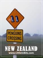 New Zealand Oamaru Penguins