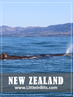 New Zealand Kaikoura Whale Watching