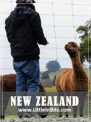New Zealand Moeraki Boulders Alpacas