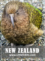 New Zealand Milford Sound Kia Parrot