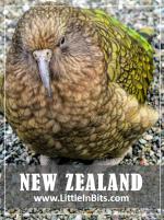 New Zealand Milford Sound Kia Parrot
