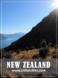 New Zealand Wye Creek Track