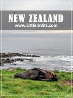 New Zealand Waipapa Point Lighthouse Seals